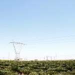 palm-farm