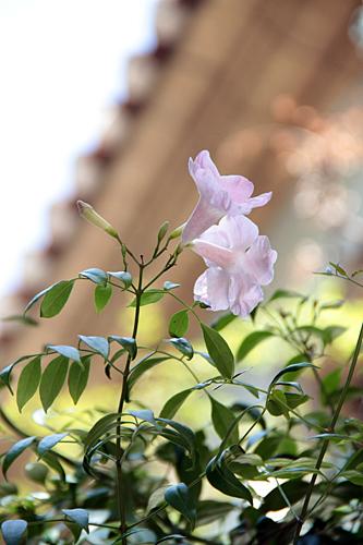 Flores España