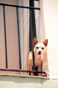 Dog in Spain
